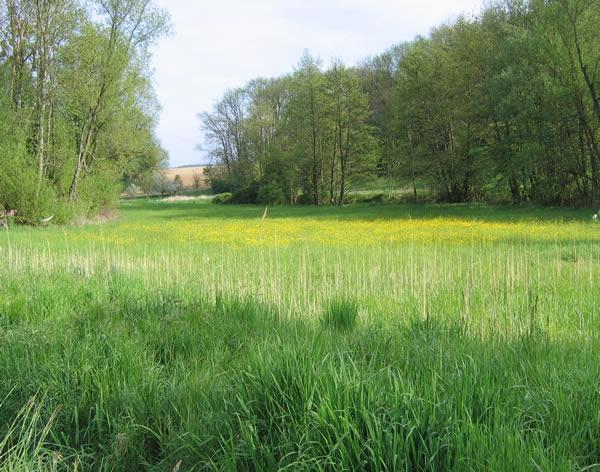 Prairie Alsace